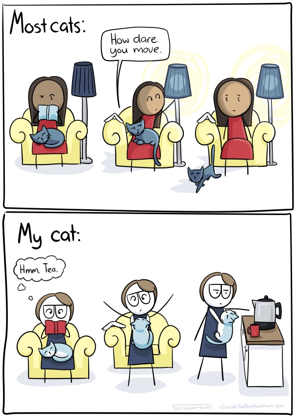 "Other cats: [person reading with cat on lap. They reach to turn on lamp, cat looks up says, ""How dare you move"". Person is sad as cat walks away. My cat: me sitting reading with cat on lap and I think ""hmm, tea.'. I get up, but cat latches to my front. I make tea with cross cat latched to me."
